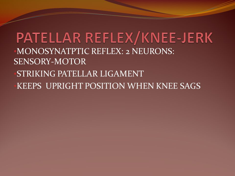 PATELLAR REFLEX/KNEE-JERK