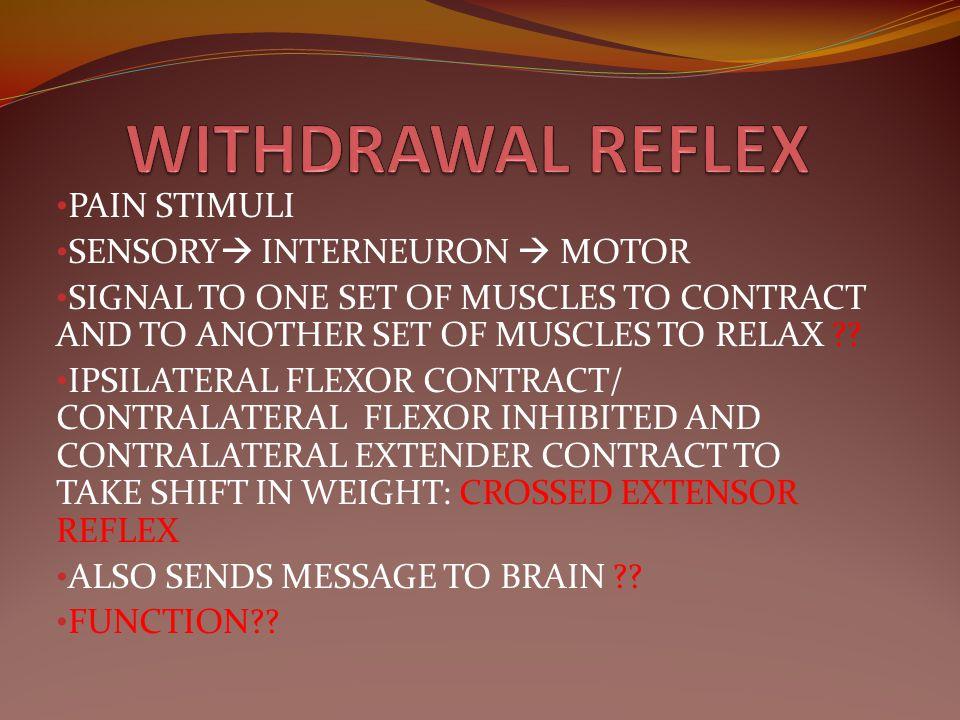WITHDRAWAL REFLEX PAIN STIMULI SENSORY INTERNEURON  MOTOR