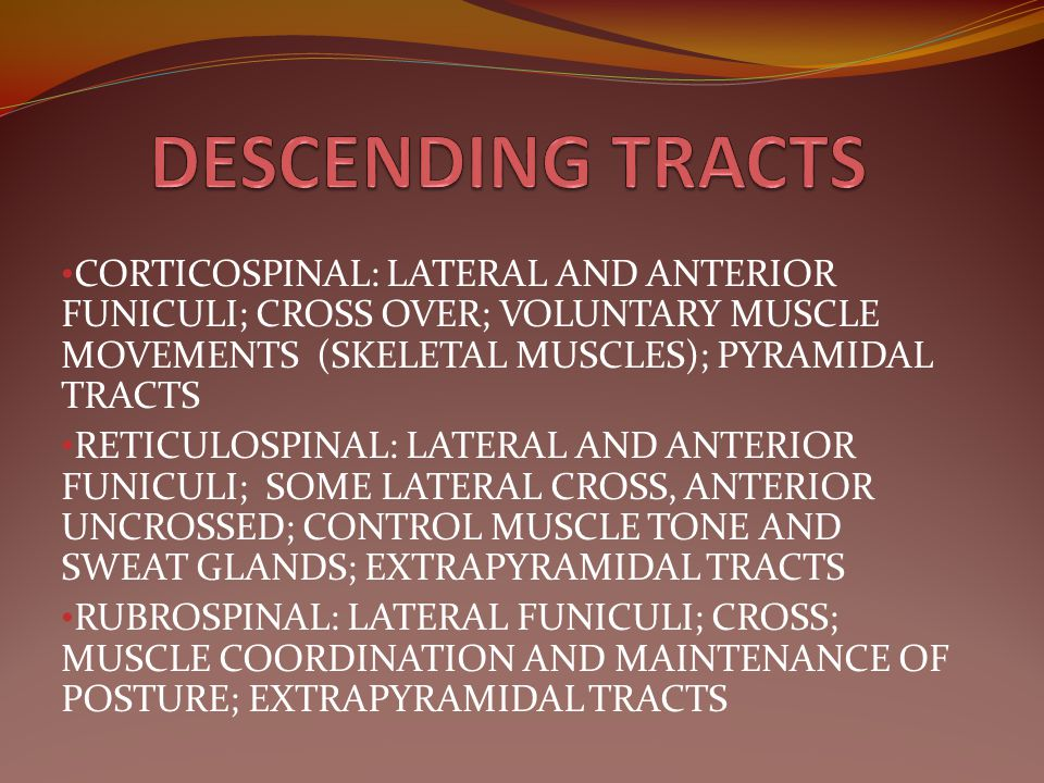 DESCENDING TRACTS CORTICOSPINAL: LATERAL AND ANTERIOR FUNICULI; CROSS OVER; VOLUNTARY MUSCLE MOVEMENTS (SKELETAL MUSCLES); PYRAMIDAL TRACTS.