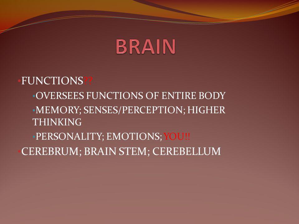 BRAIN FUNCTIONS CEREBRUM; BRAIN STEM; CEREBELLUM