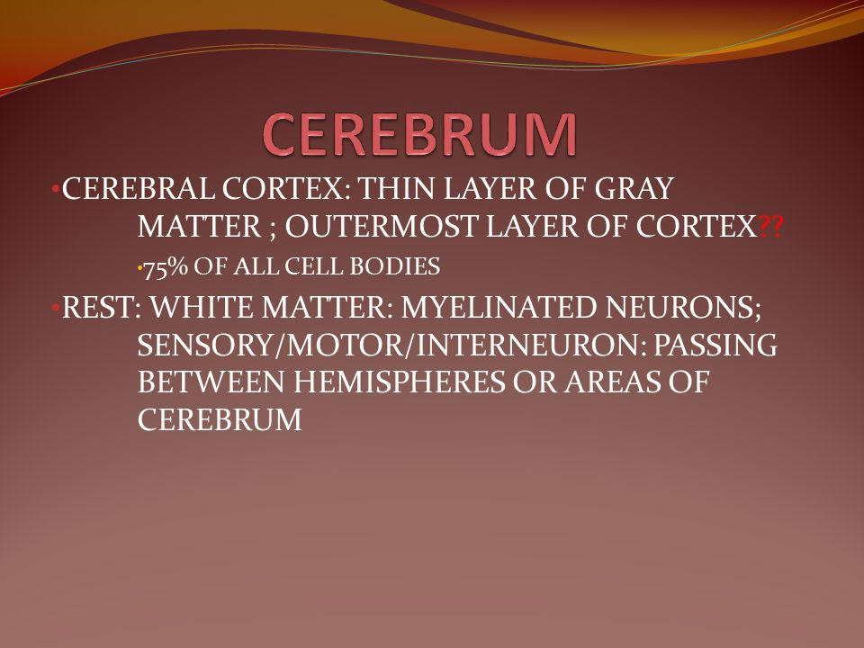 CEREBRUM CEREBRAL CORTEX: THIN LAYER OF GRAY MATTER ; OUTERMOST LAYER OF CORTEX 75% OF ALL CELL BODIES.