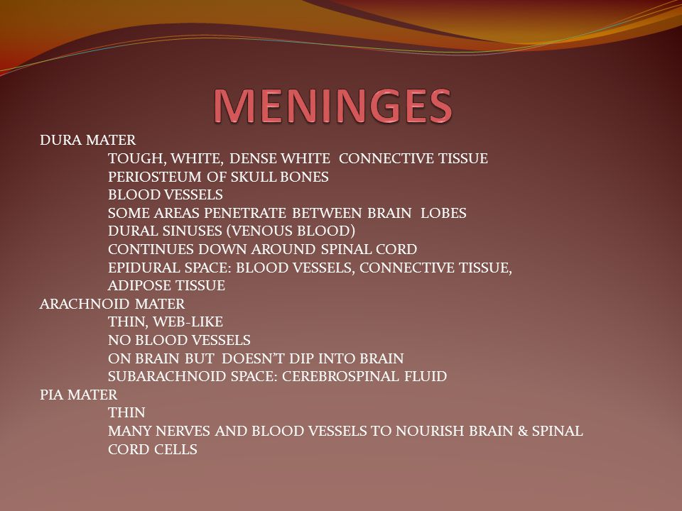 MENINGES DURA MATER TOUGH, WHITE, DENSE WHITE CONNECTIVE TISSUE