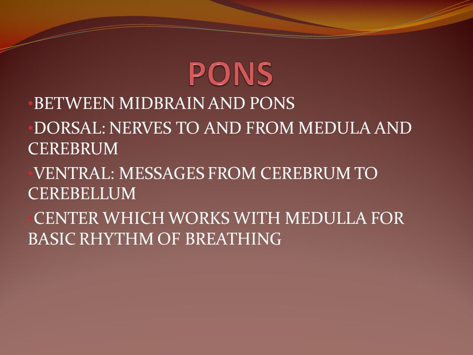 PONS BETWEEN MIDBRAIN AND PONS