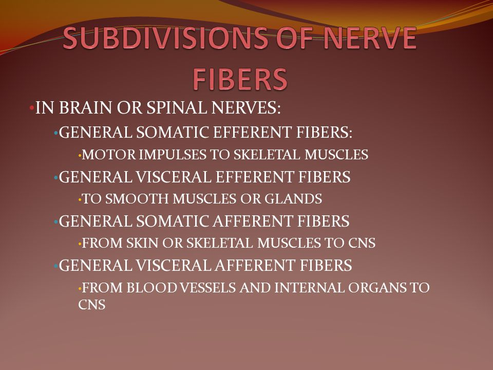 SUBDIVISIONS OF NERVE FIBERS