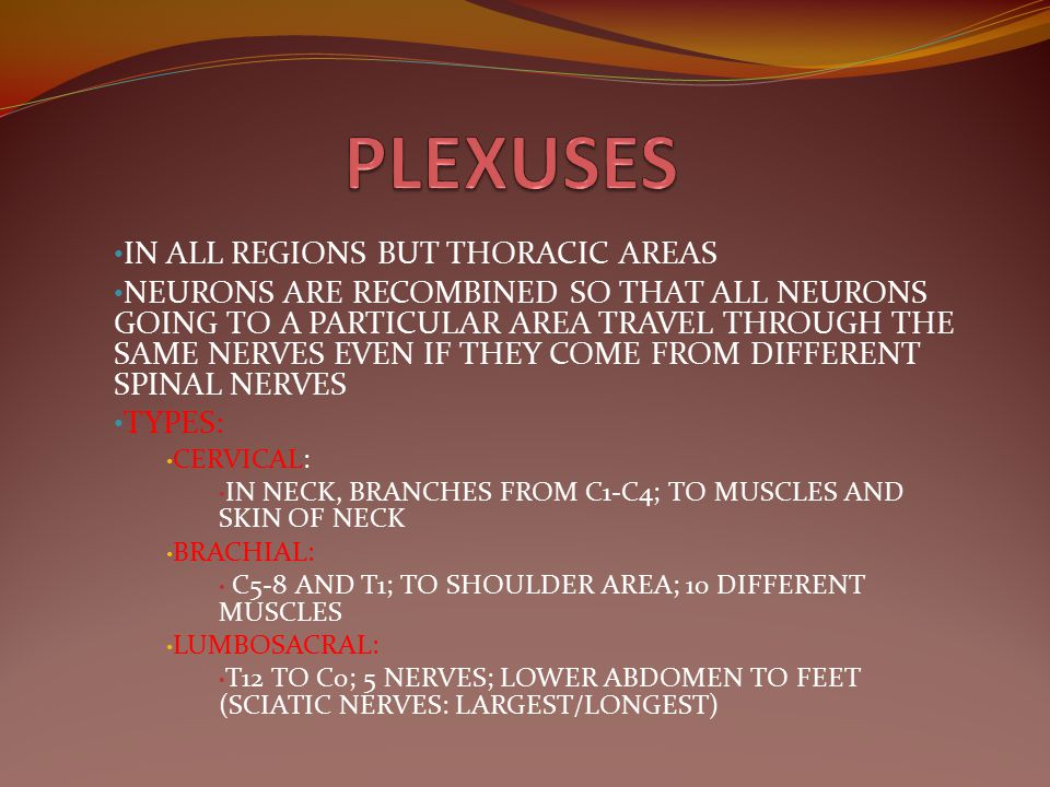 PLEXUSES IN ALL REGIONS BUT THORACIC AREAS