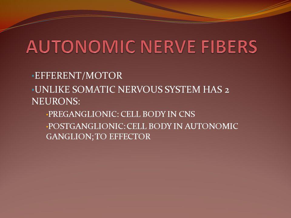 AUTONOMIC NERVE FIBERS