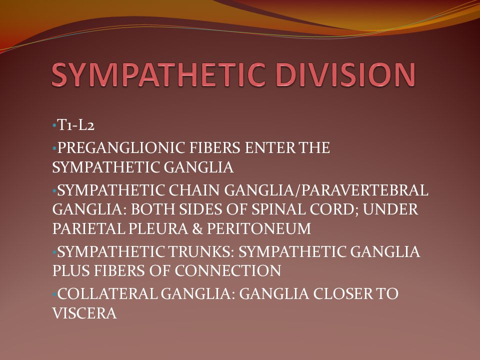 SYMPATHETIC DIVISION T1-L2