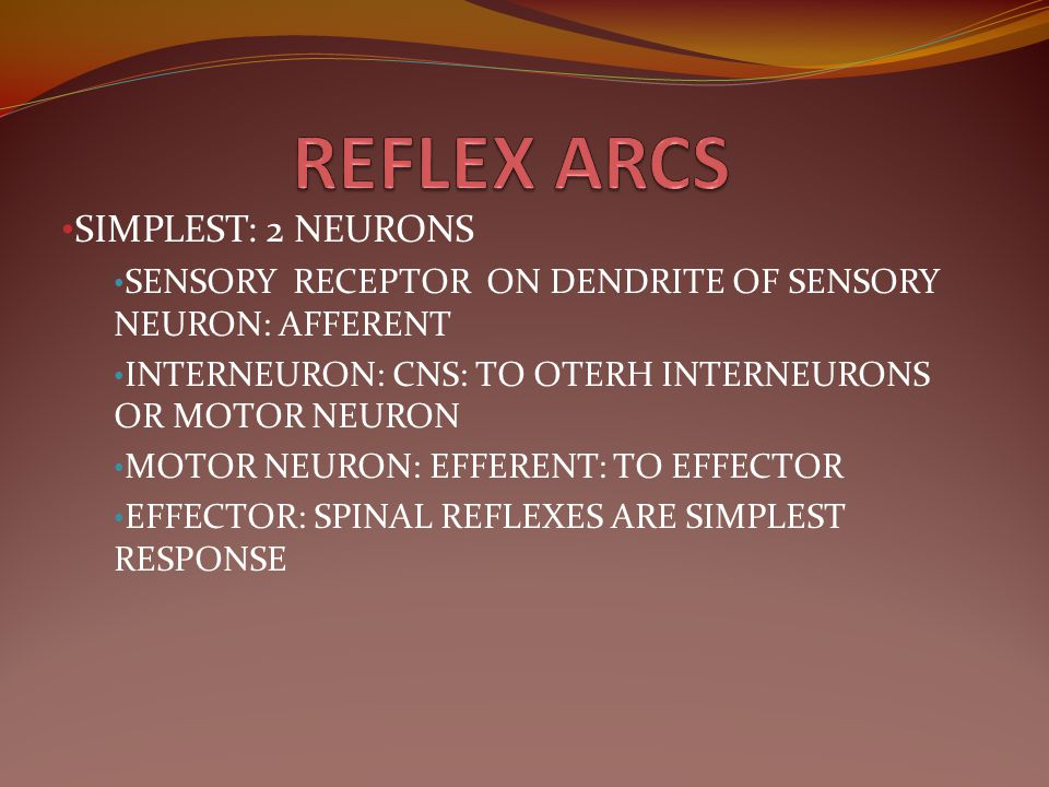REFLEX ARCS SIMPLEST: 2 NEURONS