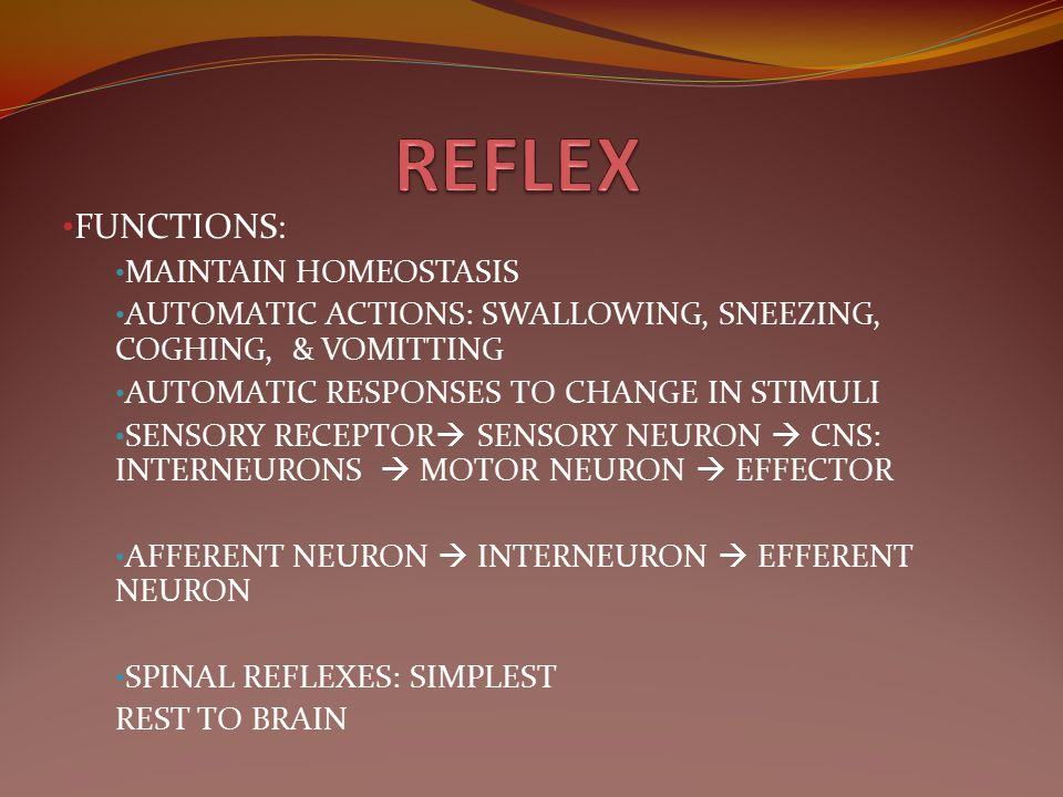 REFLEX FUNCTIONS: MAINTAIN HOMEOSTASIS