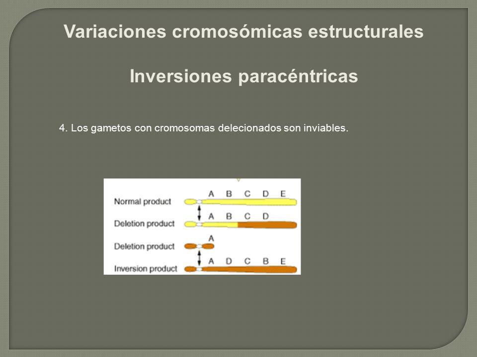 Variaciones cromosómicas estructurales Inversiones paracéntricas