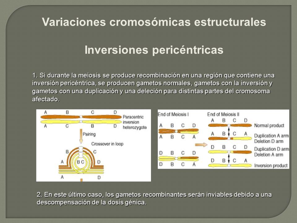 Variaciones cromosómicas estructurales Inversiones pericéntricas