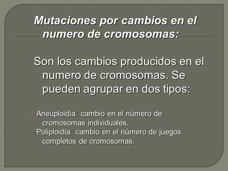 Mutaciones por cambios en el numero de cromosomas:
