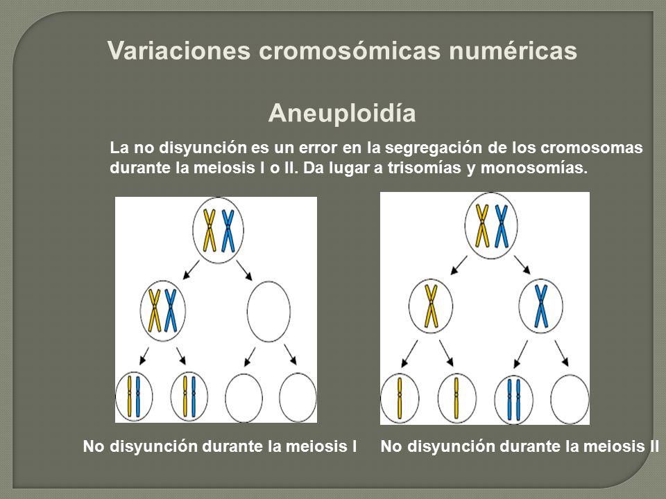 Variaciones cromosómicas numéricas Aneuploidía