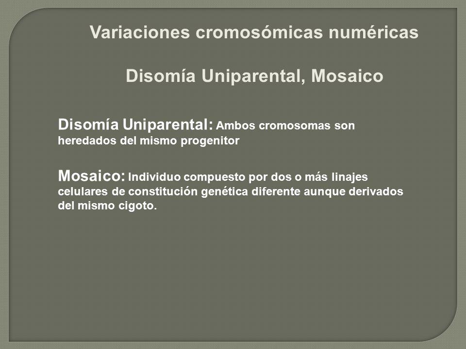 Variaciones cromosómicas numéricas Disomía Uniparental, Mosaico