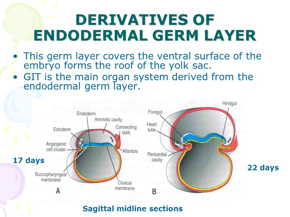 DERIVATIVES OF ENDODERMAL GERM LAYER