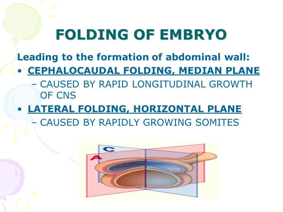 FOLDING OF EMBRYO Leading to the formation of abdominal wall:
