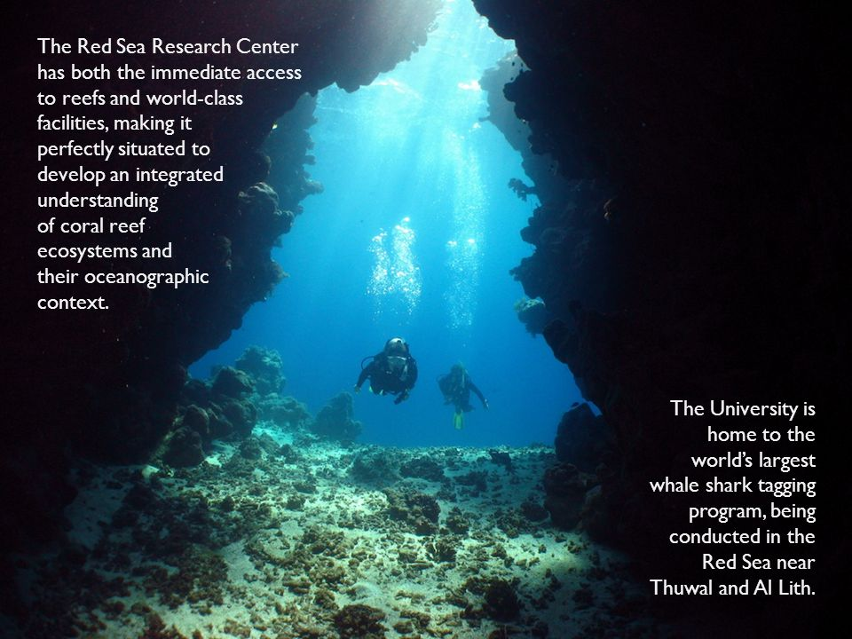 The Red Sea Research Center has both the immediate access to reefs and world-class facilities, making it