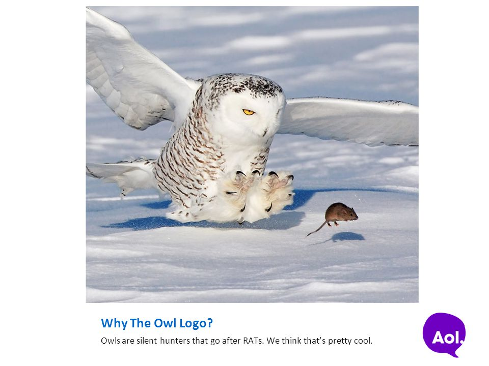 Why The Owl Logo Owls are silent hunters that go after RATs. We think that's pretty cool.