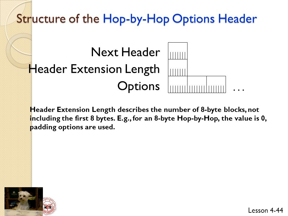 Structure of the Hop-by-Hop Options Header