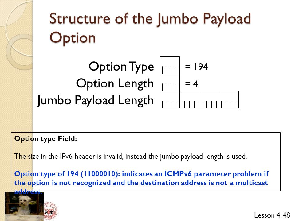 Structure of the Jumbo Payload Option