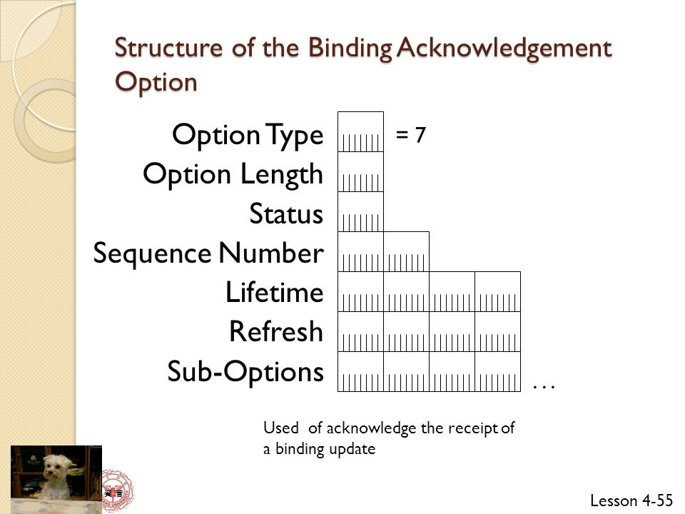Structure of the Binding Acknowledgement Option