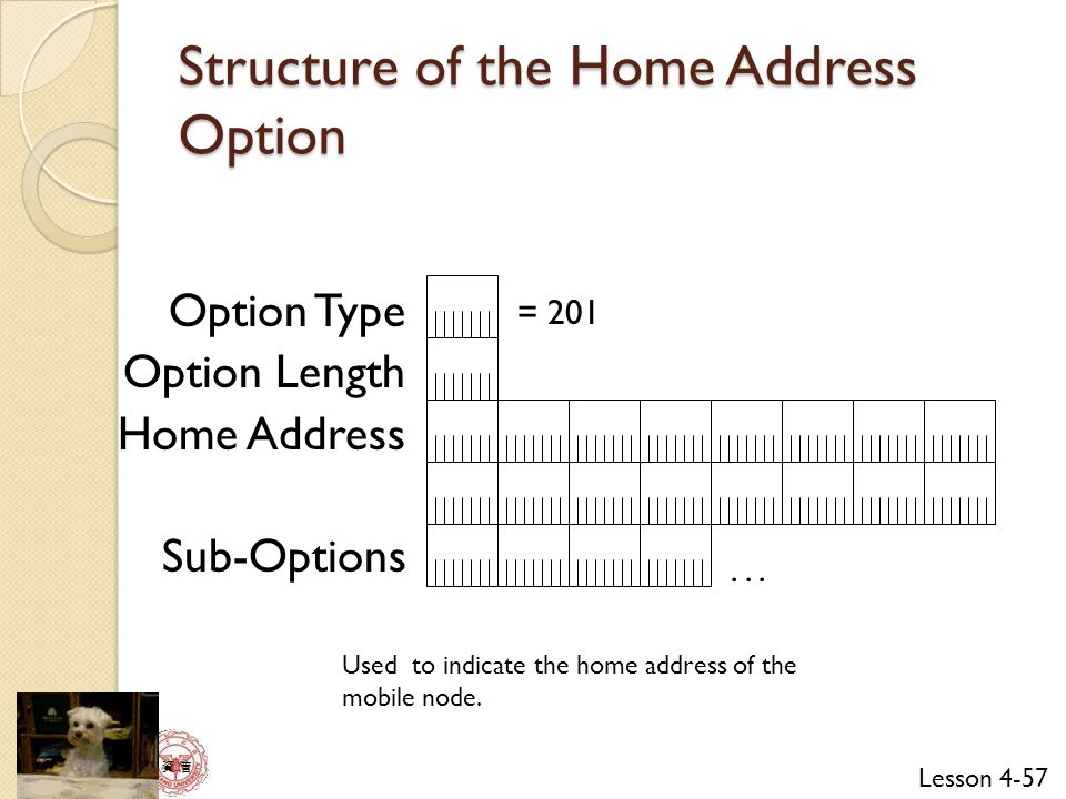 Structure of the Home Address Option