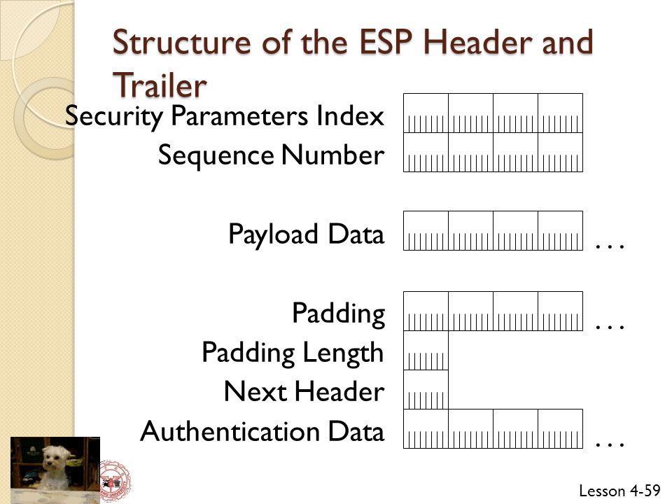 Structure of the ESP Header and Trailer