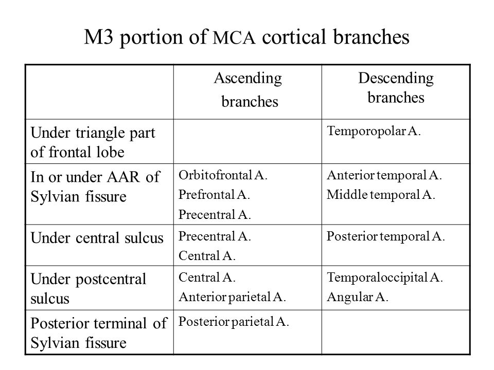 M3 portion of MCA cortical branches