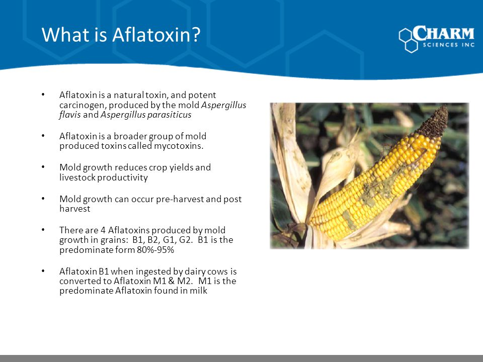 What is Aflatoxin Aflatoxin is a natural toxin, and potent carcinogen, produced by the mold Aspergillus flavis and Aspergillus parasiticus.