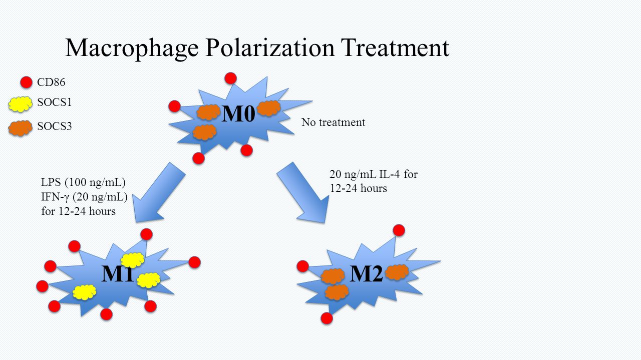 Macrophage Polarization Treatment