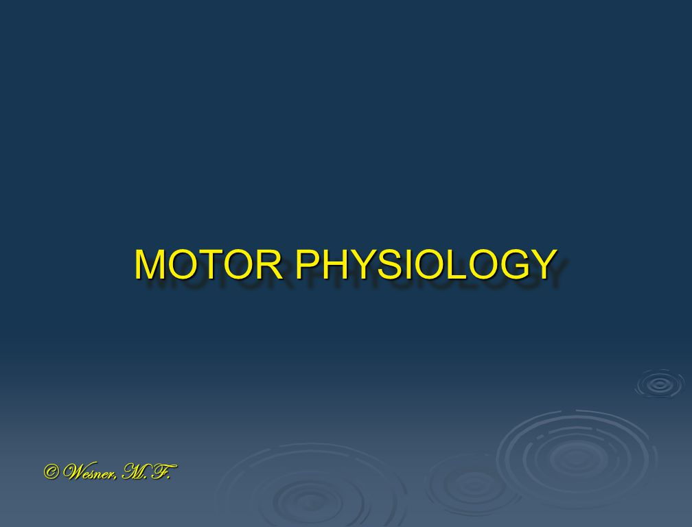 MOTOR PHYSIOLOGY © Wesner, M. F.