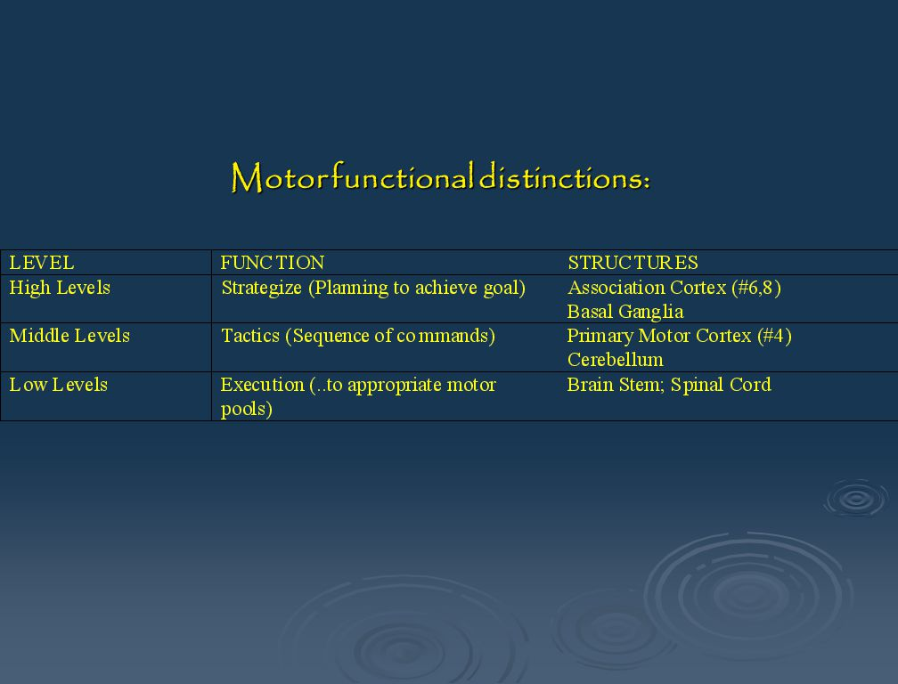 Motor functional distinctions: