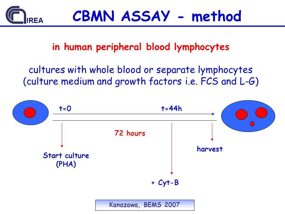 CBMN ASSAY - method in human peripheral blood lymphocytes
