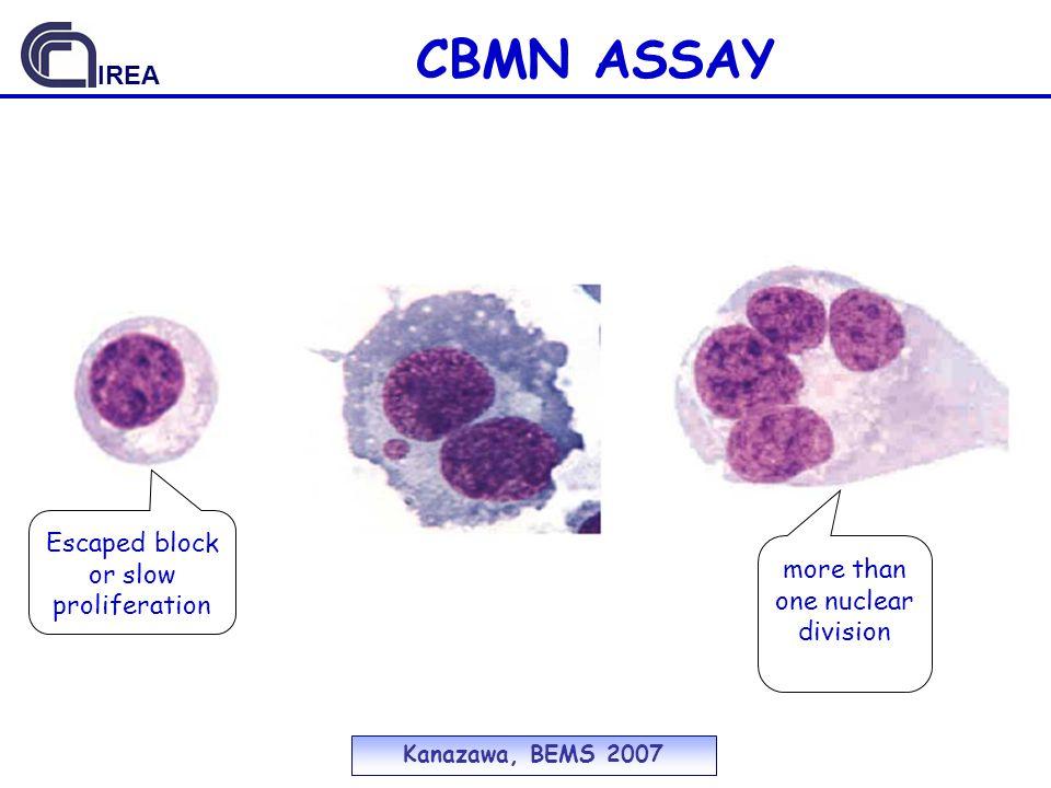 CBMN ASSAY IREA Escaped block or slow proliferation