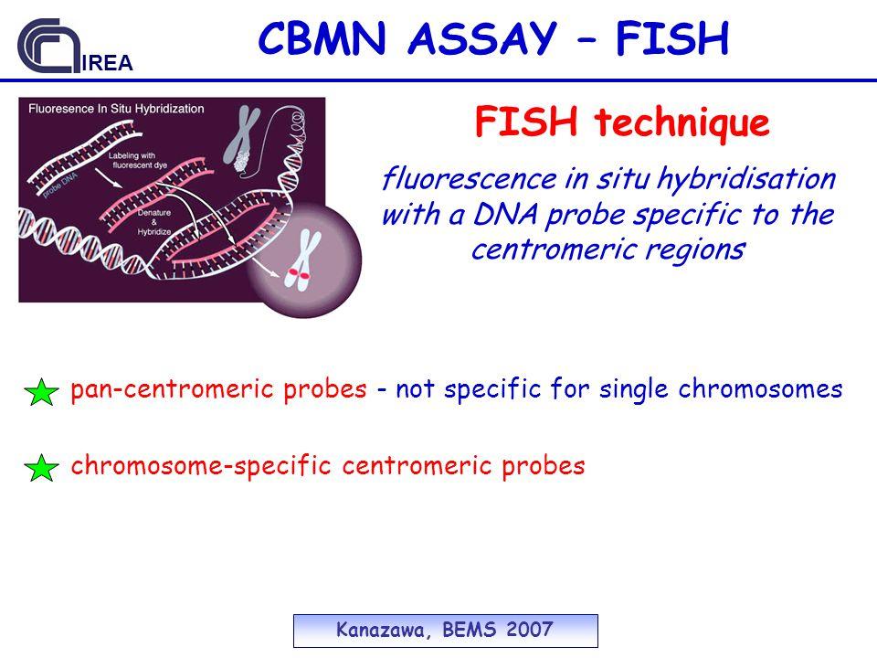 CBMN ASSAY – FISH FISH technique