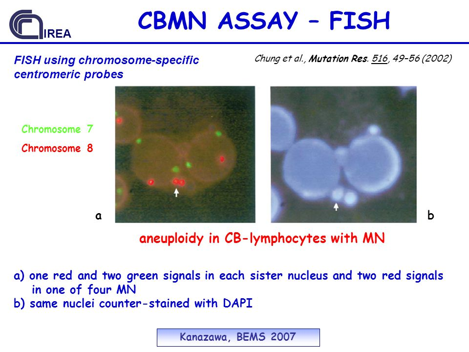 CBMN ASSAY – FISH aneuploidy in CB-lymphocytes with MN IREA