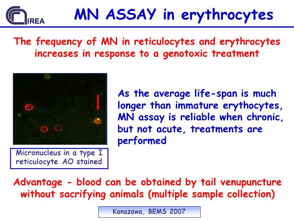 MN ASSAY in erythrocytes