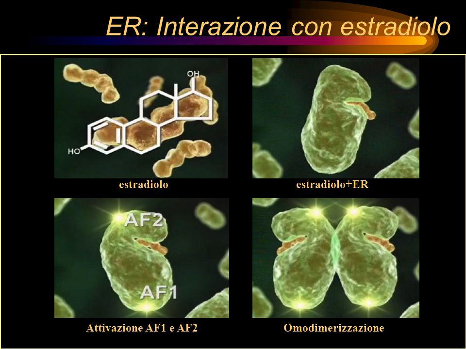 ER: Interazione con estradiolo
