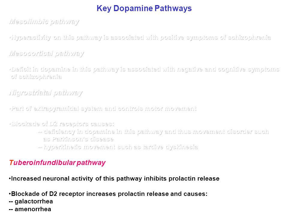 Key Dopamine Pathways Mesolimbic pathway Mesocortical pathway