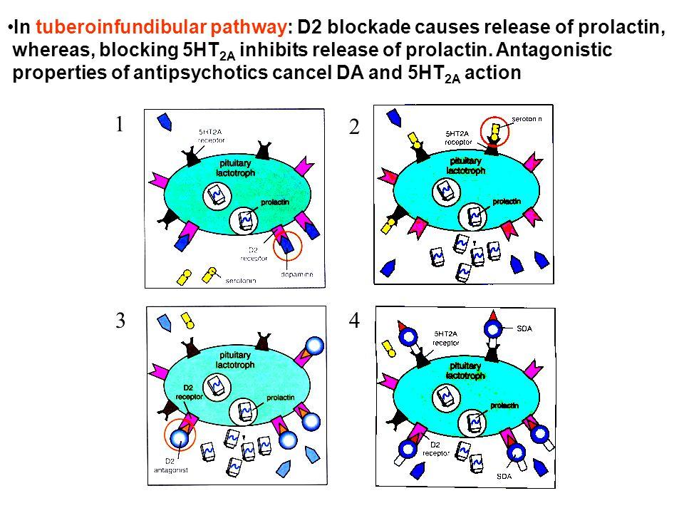 In tuberoinfundibular pathway: D2 blockade causes release of prolactin,