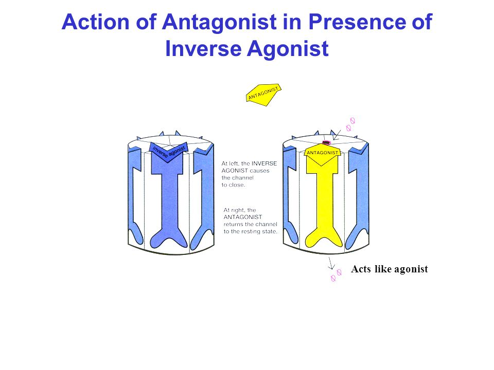 Action of Antagonist in Presence of Inverse Agonist
