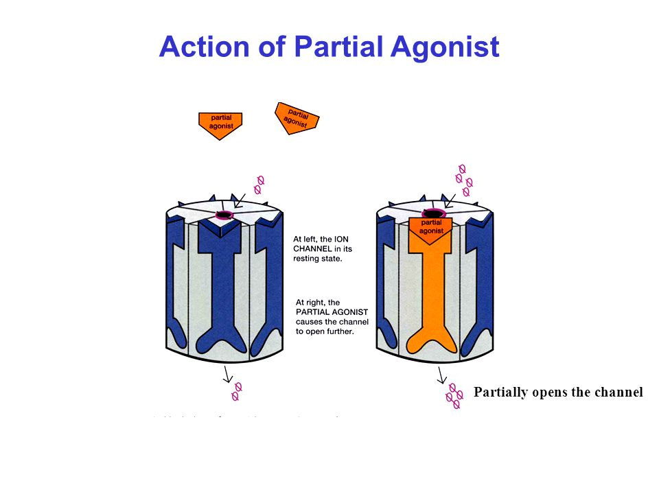 Action of Partial Agonist