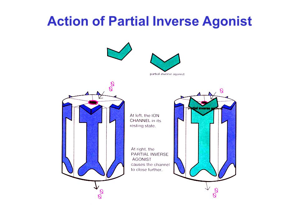 Action of Partial Inverse Agonist