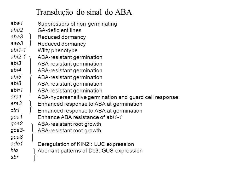 Transdução do sinal do ABA