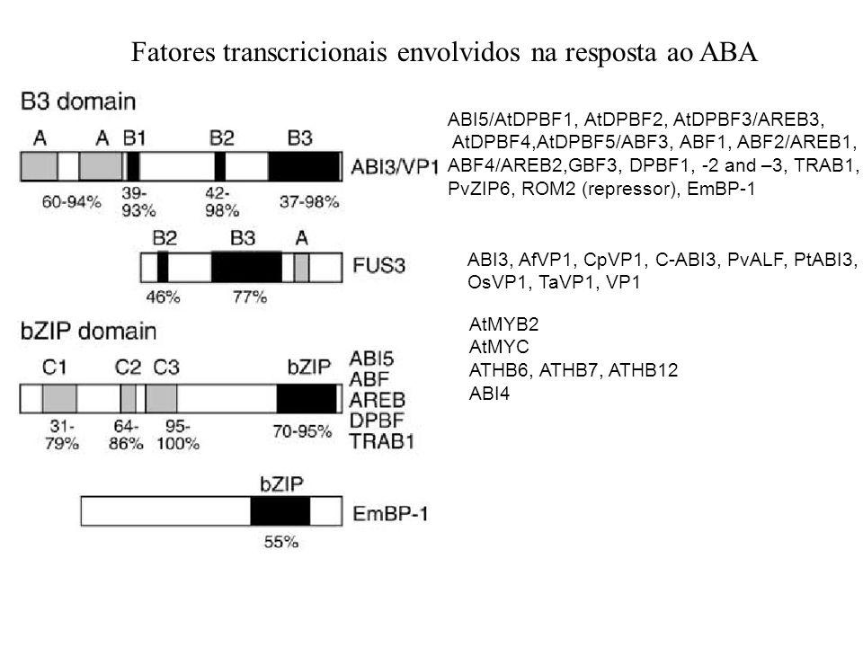 Fatores transcricionais envolvidos na resposta ao ABA