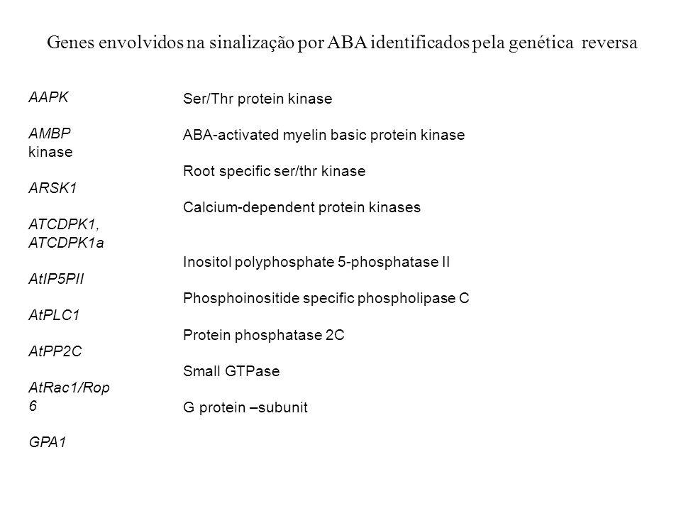 Genes envolvidos na sinalização por ABA identificados pela genética reversa