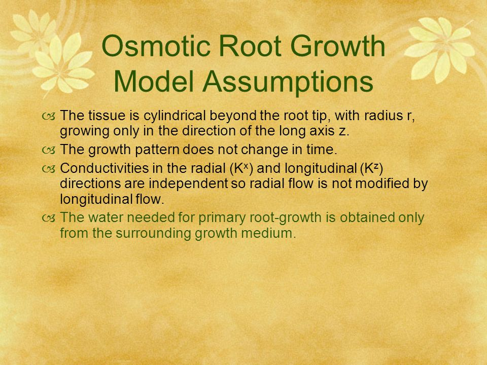 Osmotic Root Growth Model Assumptions