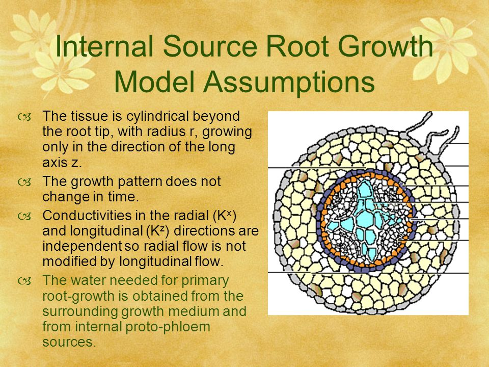 Internal Source Root Growth Model Assumptions