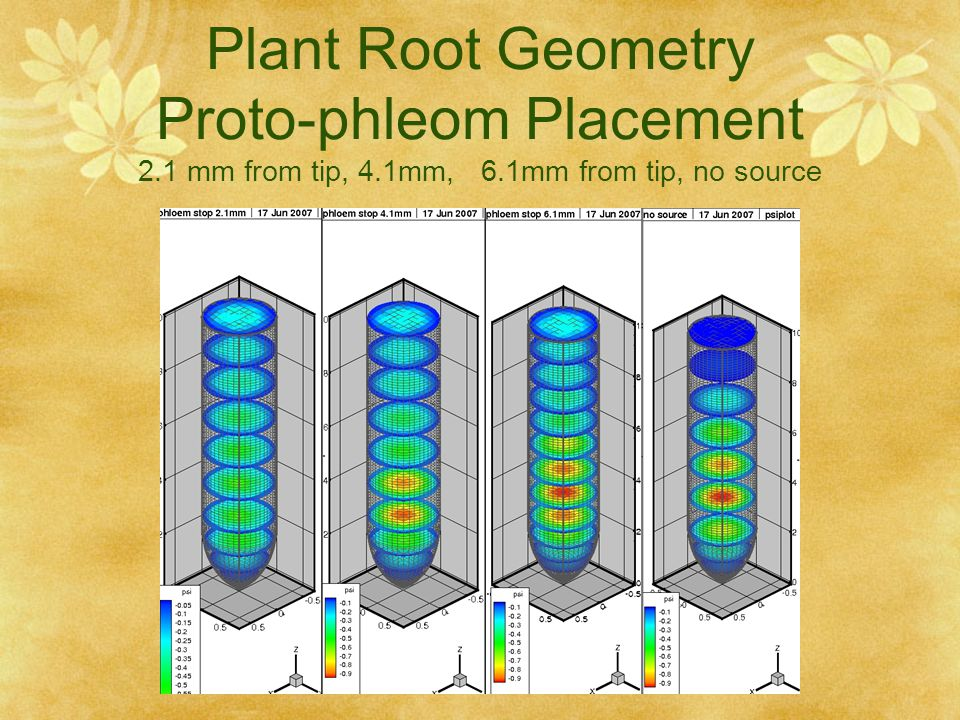 Plant Root Geometry Proto-phleom Placement 2. 1 mm from tip, 4. 1mm, 6