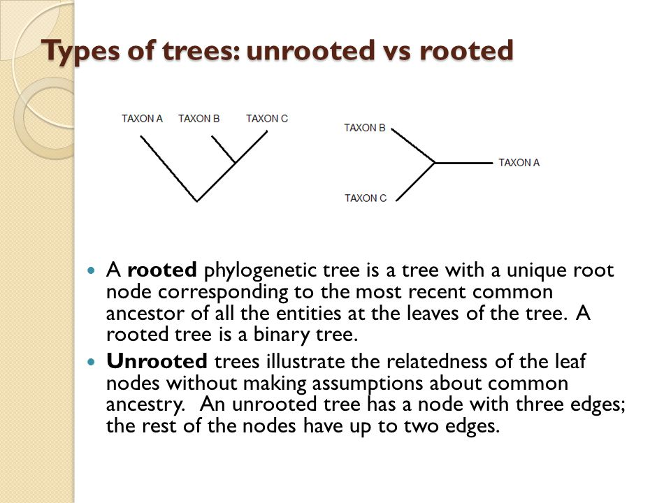 Types of trees: unrooted vs rooted